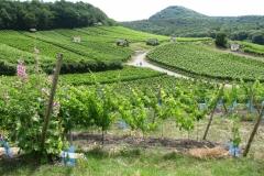 Blick über die Weinberge zum Zabelstein (490 m ü. NHN)