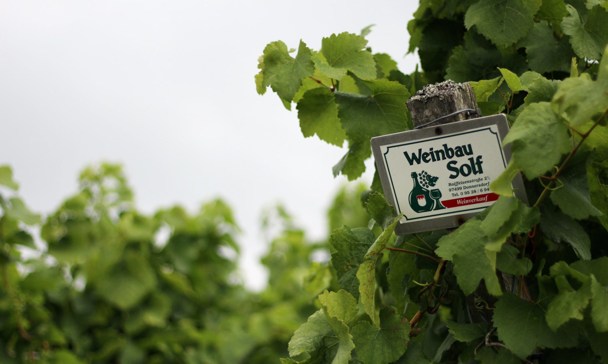 Weinbau Solf
